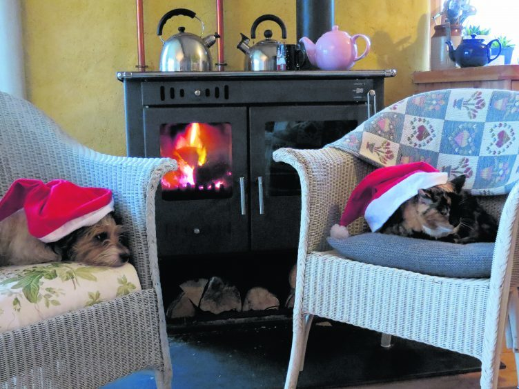 This is Wilma the Jack Russell and Lulu the tortoiseshell cat  keeping cosy by the stove at Christmas last year.