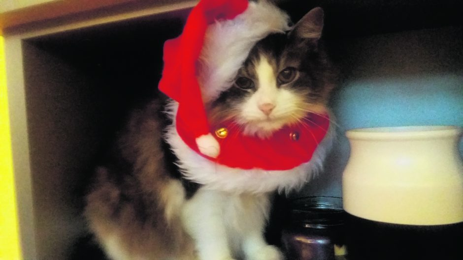 This is Charlie the festive cat. He lives with Alex and Freddy in Aberdeen.