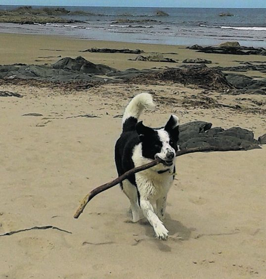 This is Archie enjoying an afternoon at Sunnyside beach. He belongs to Arran, Logan, Evie and Elsie.