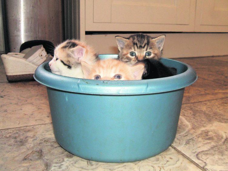 This adorable basin of kittens live with Maureen in Ellon, and are our winners this week.