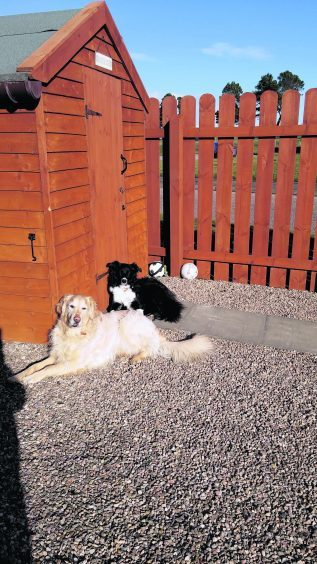 This is Calvin the golden retriever and Emmy the border collie enjoying a sunny day. They live with Kevin, Lorraine, Sharon and Louise in Macduff.