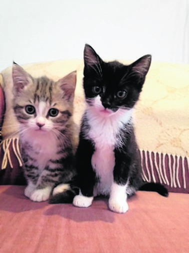We are kitten sisters and live with Alastair and Jenny Strachan