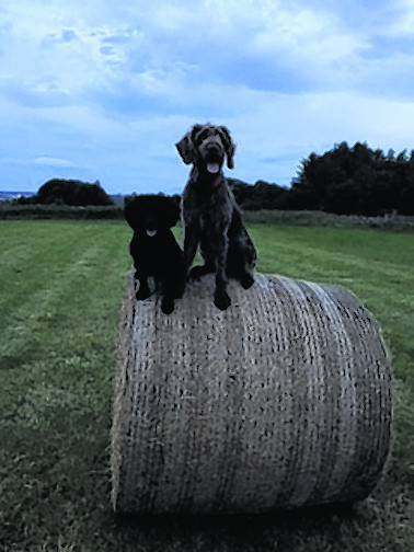 Storm and fudge live with Theresa Mick and Declan in Caithness.