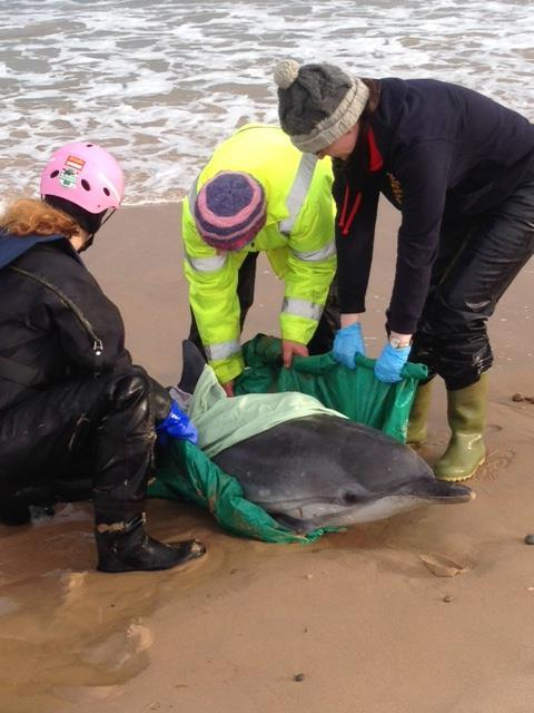Staff from the The Spey Bay Whale and Dolphin Centre raced to Lossiemouth's East Beach in a bid to save the dolphin