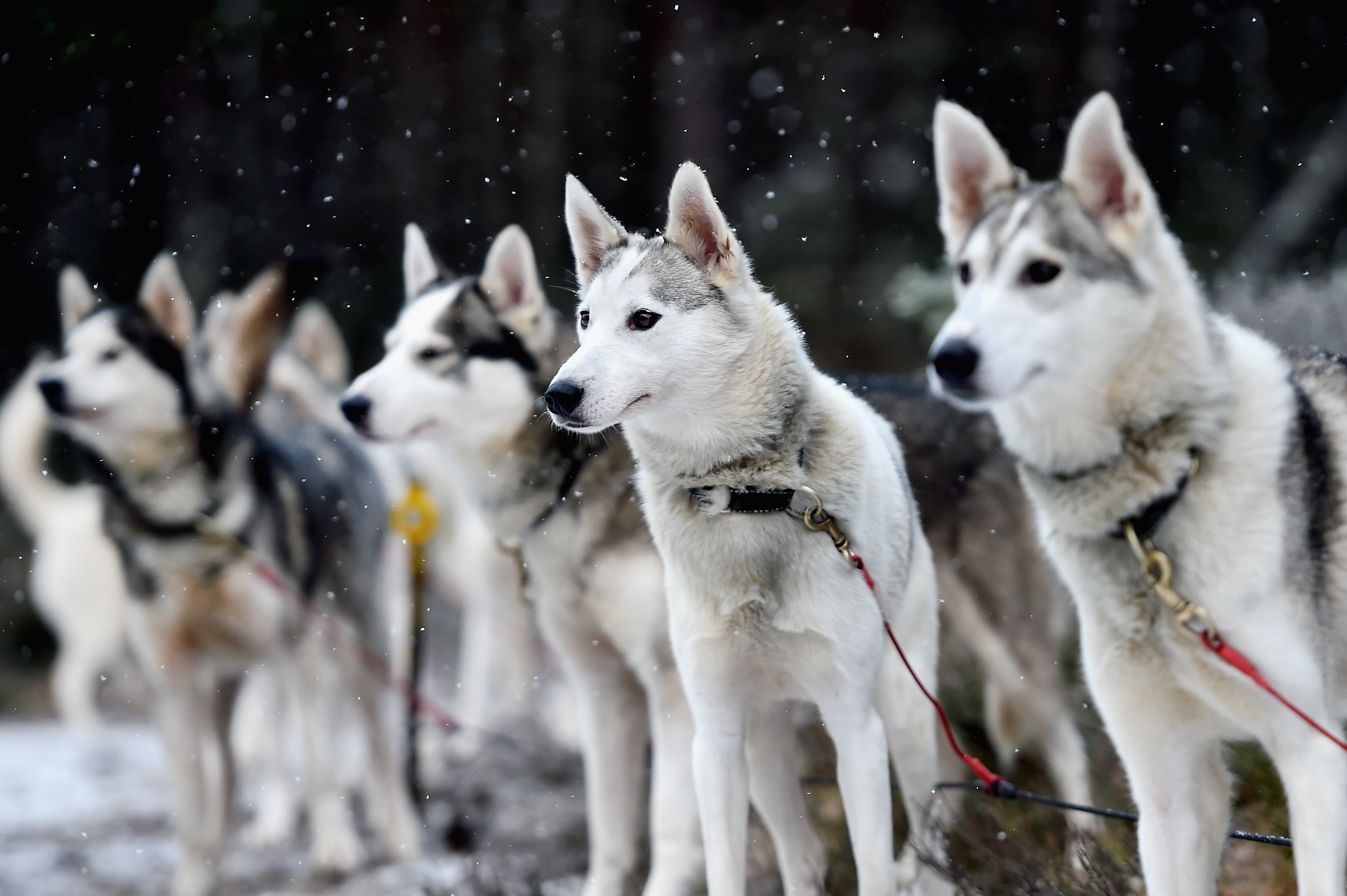 Thieves have stolen two husky sleds from an Aberdeenshire property.