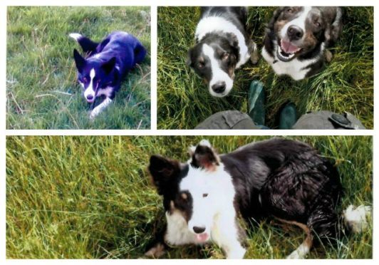 The stolen dogs have now all been found