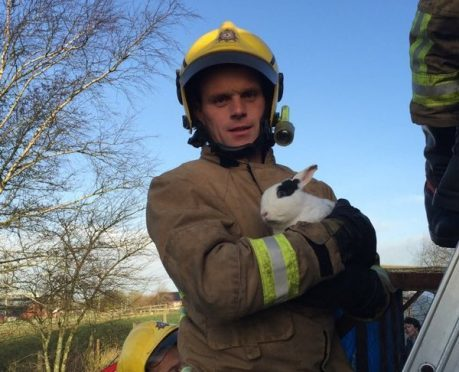 The rabbit thanks his  heroic rescuer