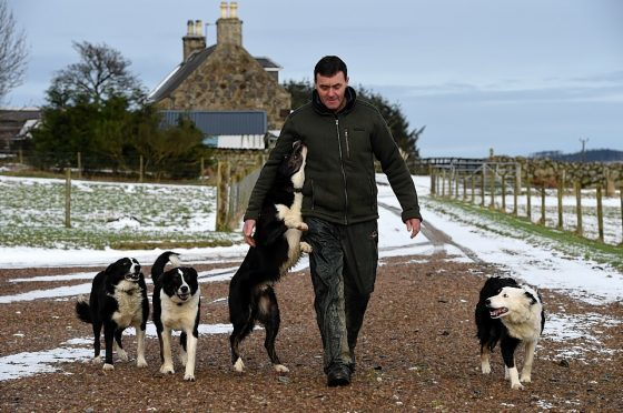 Roddy Scarborough reunited with the collies