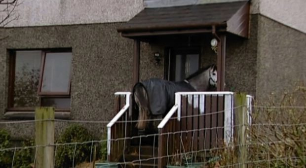 Grey Lady Too was removed from the house at Broadbay View, Back, on the Isle of Lewis