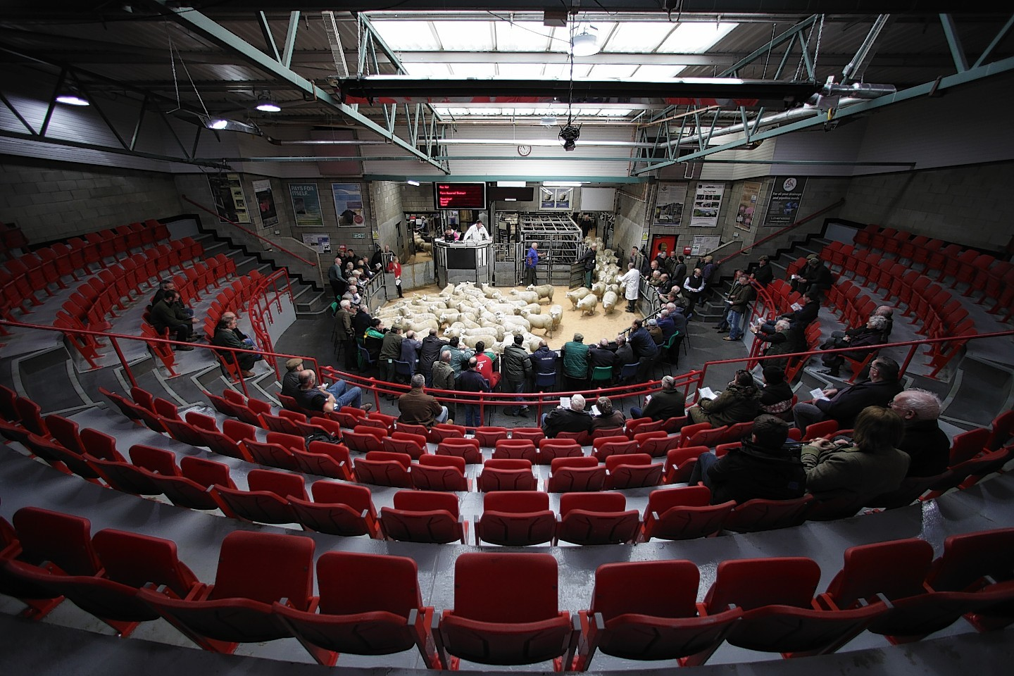 The number of livestock sold in Scottish auction marts increased in 2016.