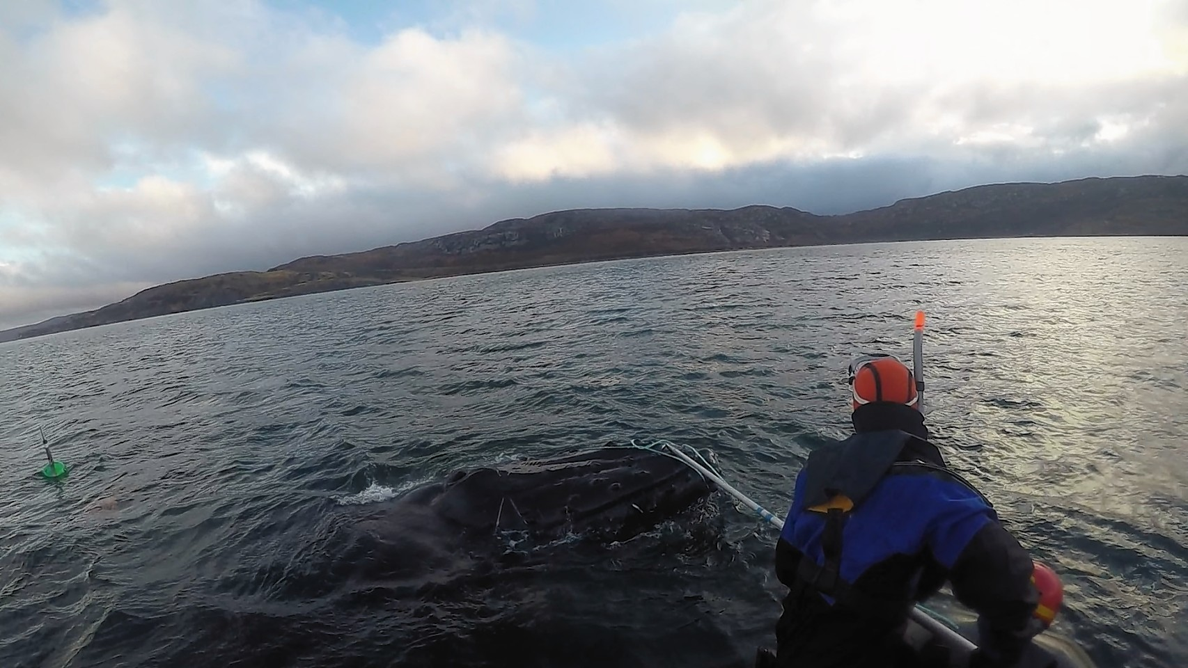 The rescue boat crew reach the whale. Picture by Noel Hawkins