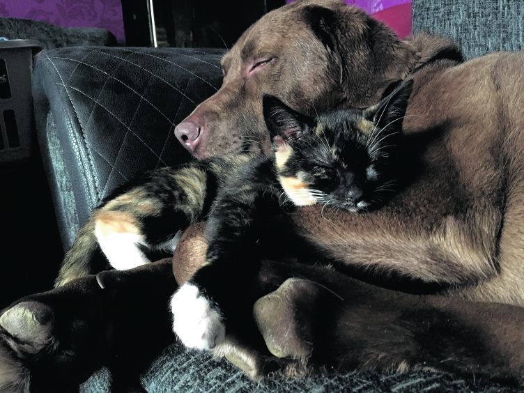 Binky the kitten and Haggis the chocolate Lab live with Thomas and Kenna Stewart on the isle of  Lewis. They are our winners this week.