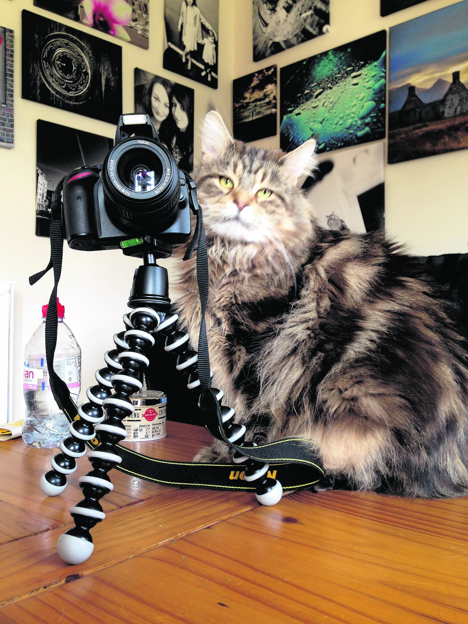 Alfie the Maine coon taking a quick snap. She lives in Inverness and is our winner this week