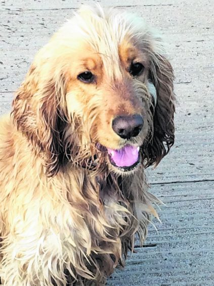 This is Ollie after a swim in the River Carron in Stonehaven. He lives with Fiona and Dougie Strachan.