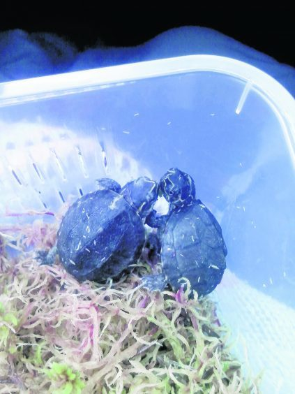 Turtles Squirtle and Nemo live with Penny in Mallaig.