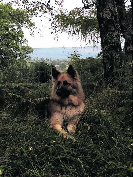 Astra the German Shepherd lives in Inverness with Mina and Graham Black