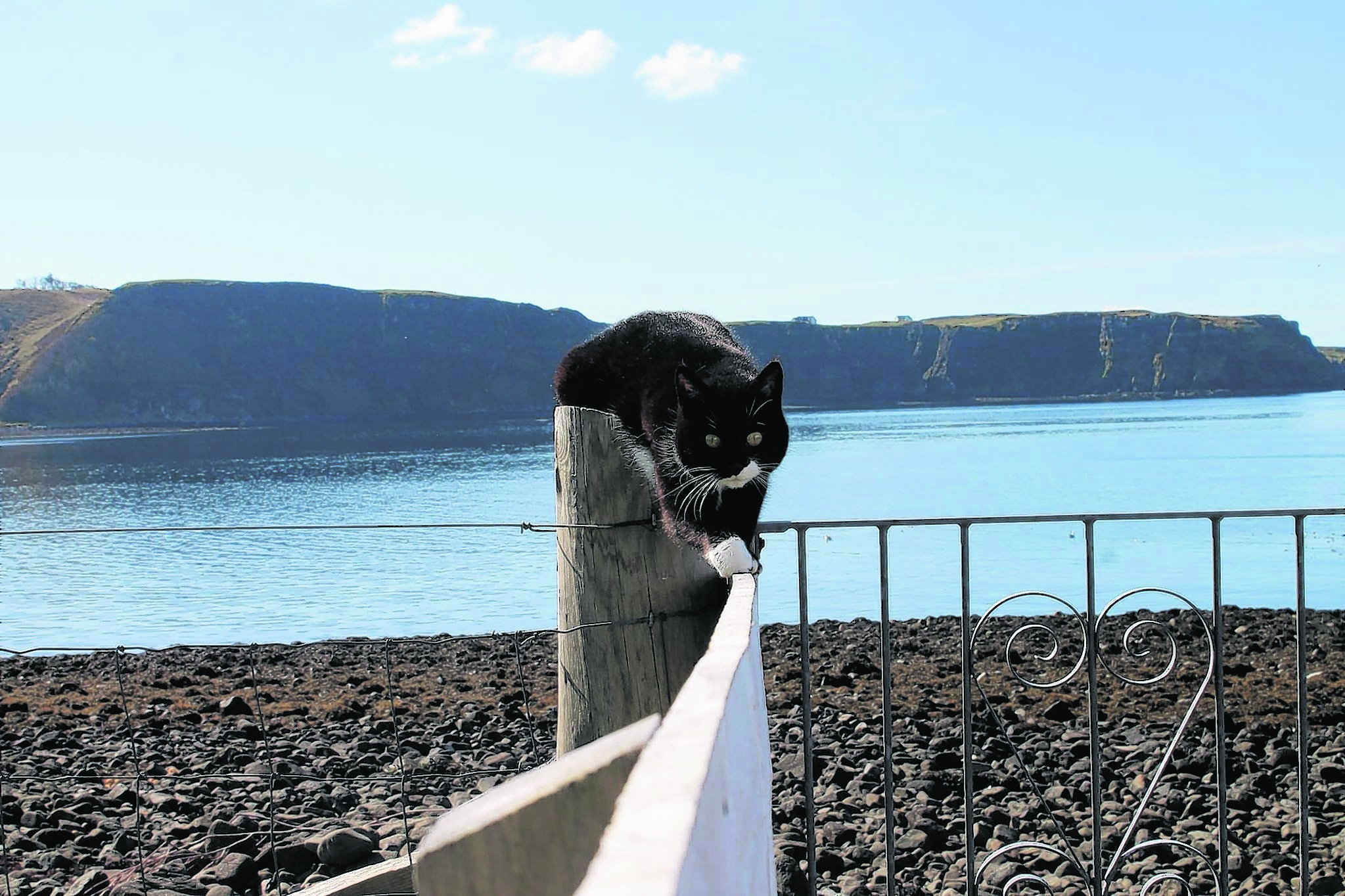 This is Thistle. She lives with the Madigan family in Uig Isle of Skye and is our winner this week