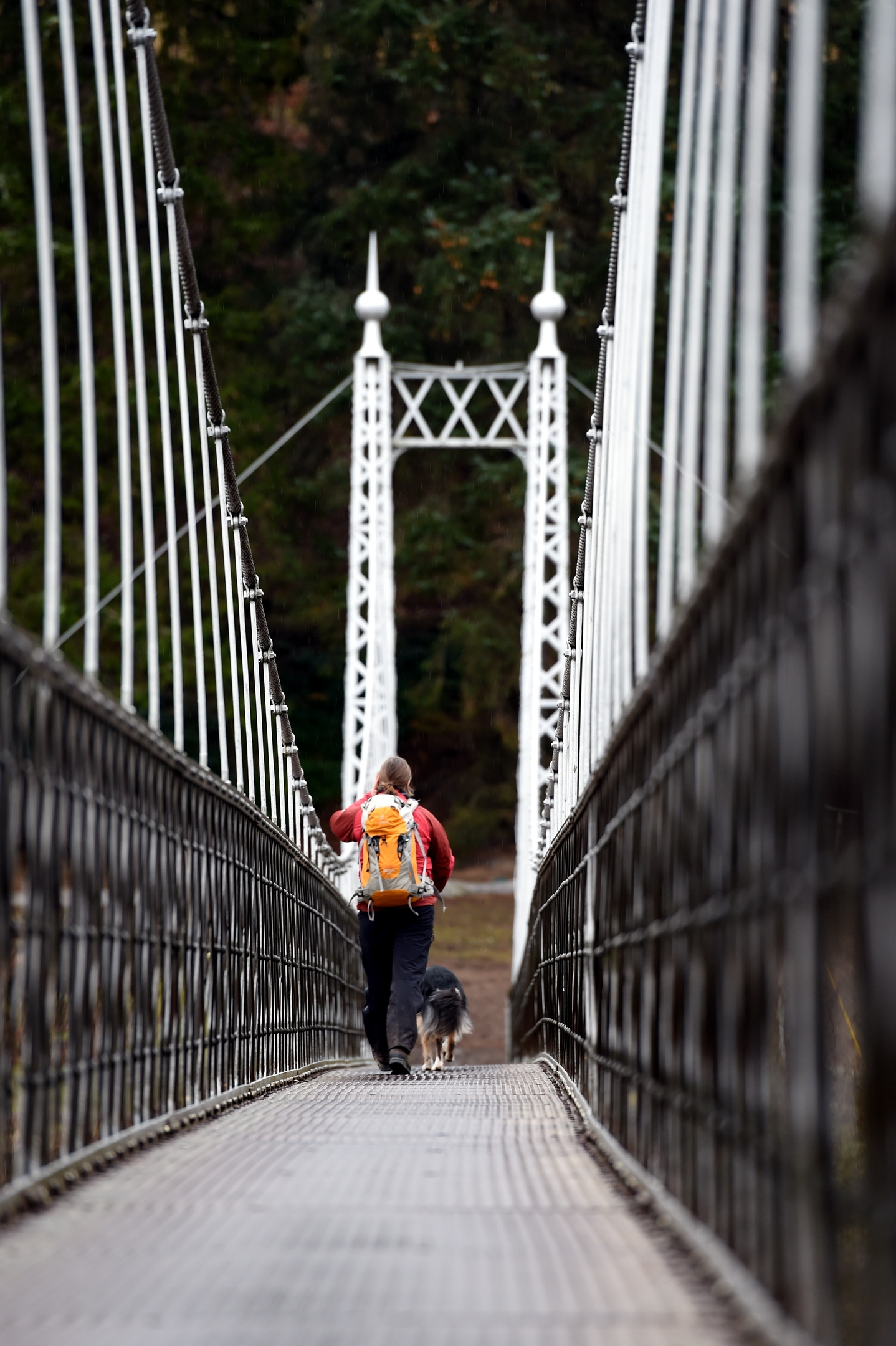 Search for missing Aberlour woman. SARDA dog and handler crossing the bridge at Aberlour before searching along the River Spey. Picture by Gordon Lennox