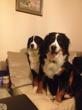 Ruby, left, with her pup Lolo who went missing last week.