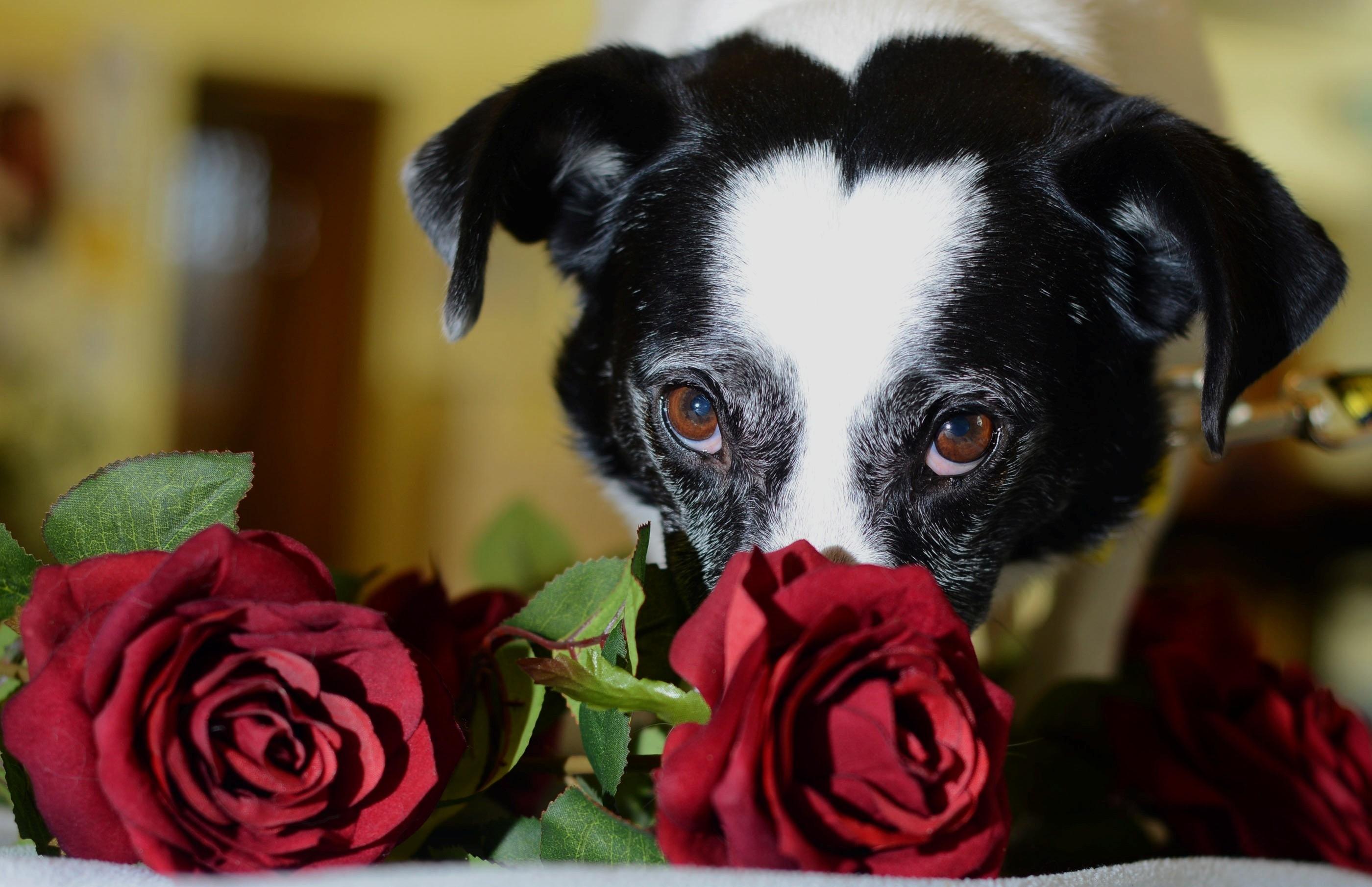 Dodger just wants love