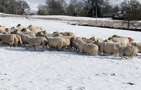 The cold conditions have been a challenge for farmers.