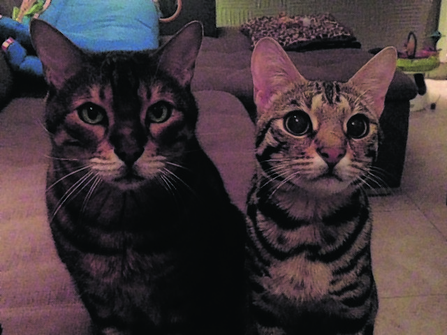 This is Mala, left, and Diva, right. They live in Cults, Aberdeen, with Sally
