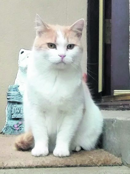 This is Snowy. He lives with Peter and Frances in Portsoy.