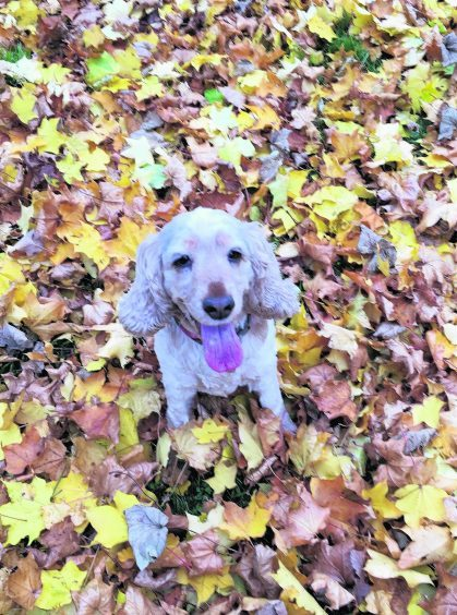 Here is Tiffin, who lives with Erica in Aberdeen, enjoying the autumn leaves.