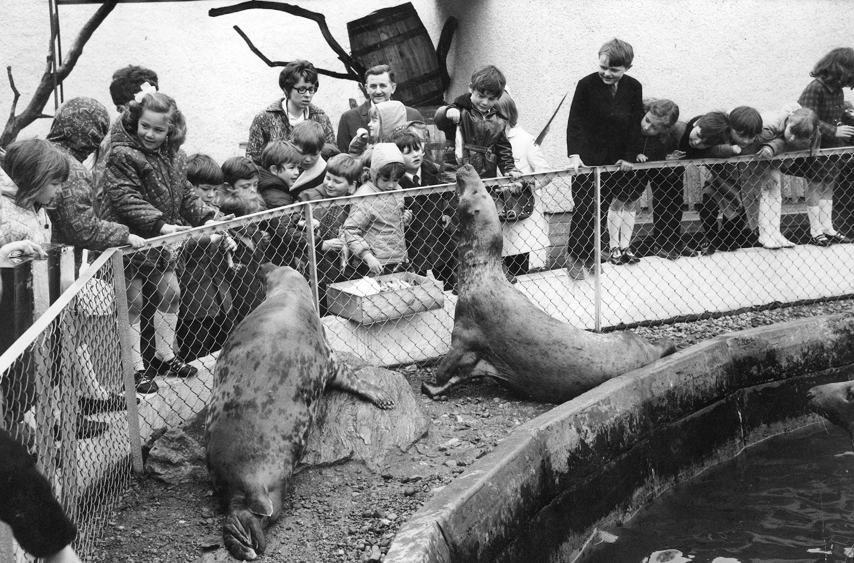 Feeding the seals was a thrill for the children of Inverallochy School, Fraserburgh, when they visited Aberdeen Zoo in May 1972 during an outing to Aberdeen. The children also visited the Winter Gardens at Duthie Park.