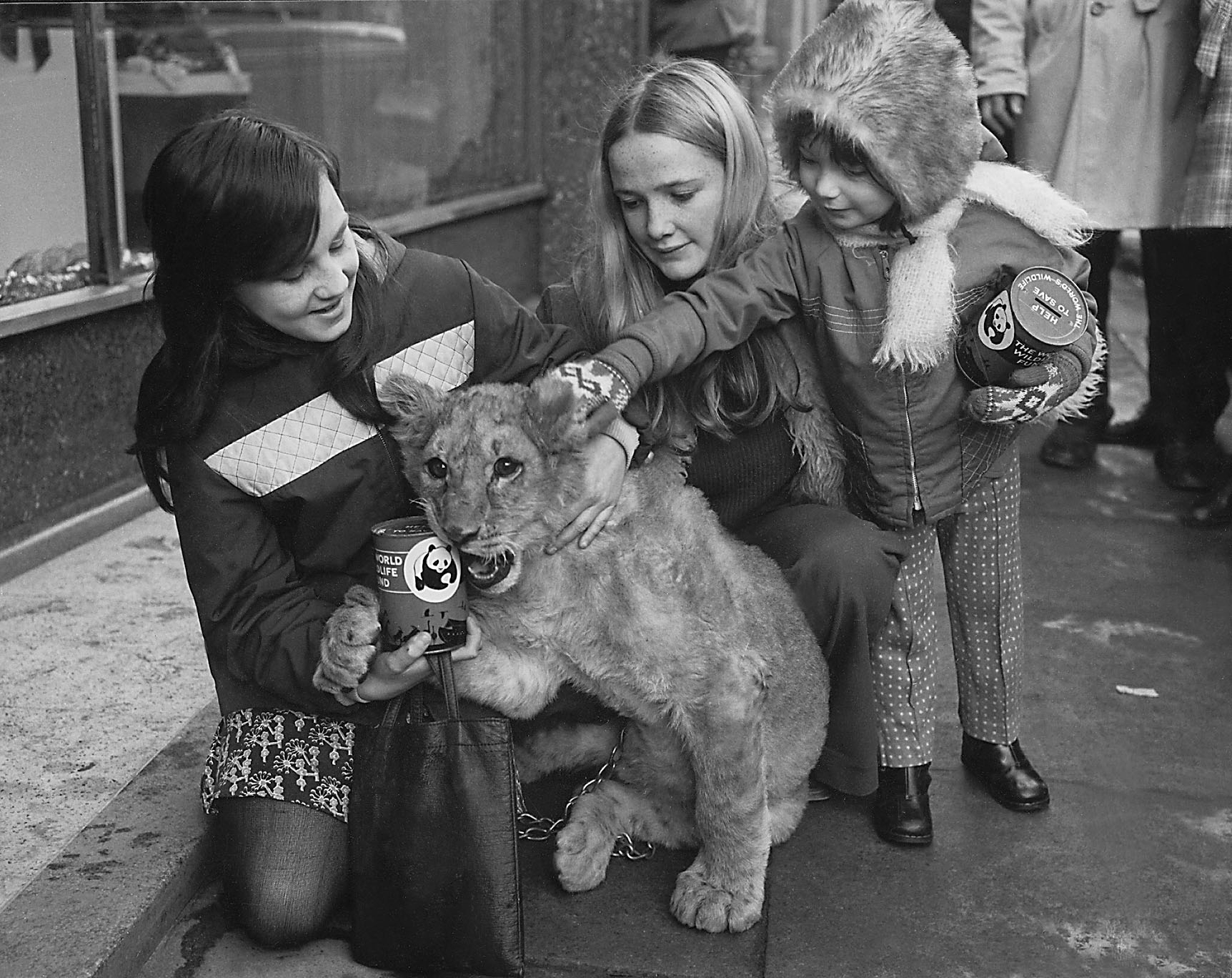 Youngsters with a lion cub who seems to be helping to raise money.