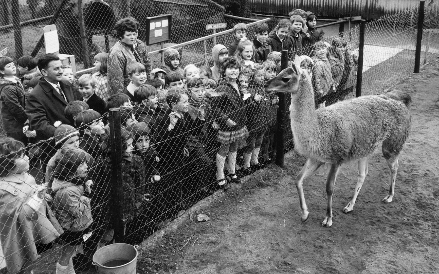 A thrill for the children of Inverallochy School, in 1972, when they visited Aberdeen Zoo during an outing to Aberdeen.