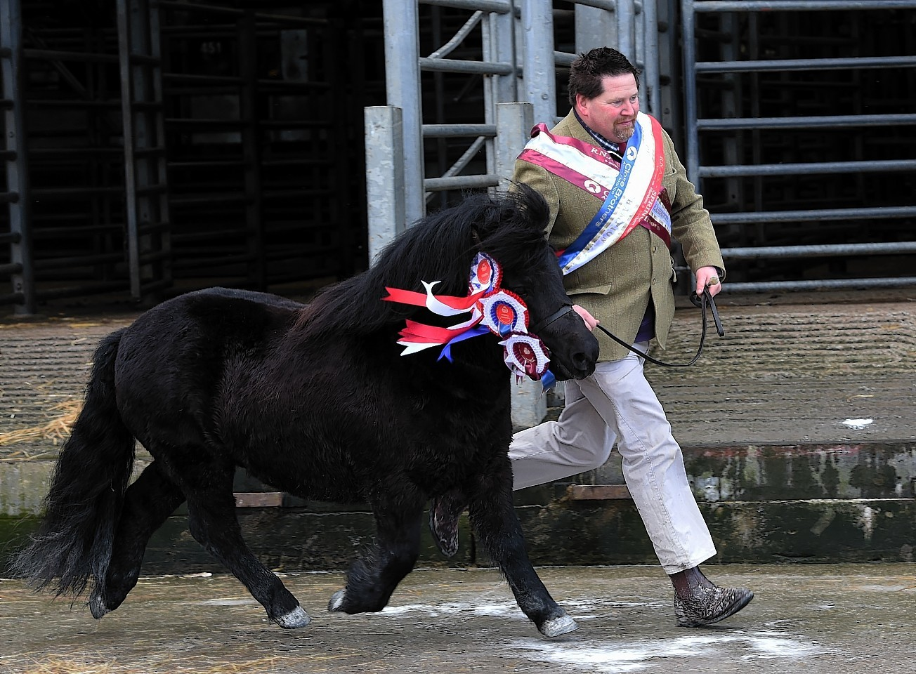 Harry Sleigh with his champion Shetland stallion