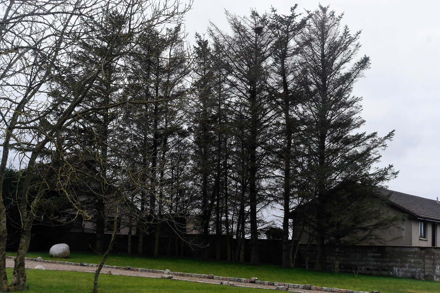 The trees at Anvil Place, in Crimond