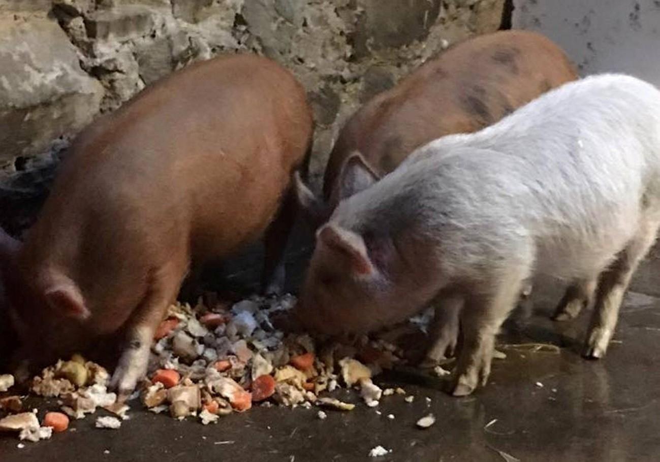 Piggy 4