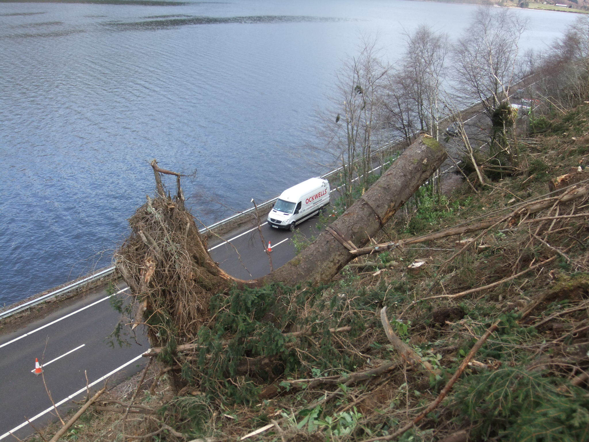 Root-plate above the A82 at Loch Lochy