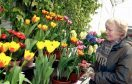 The Spring Flower Show attracts hundreds of visitors each year