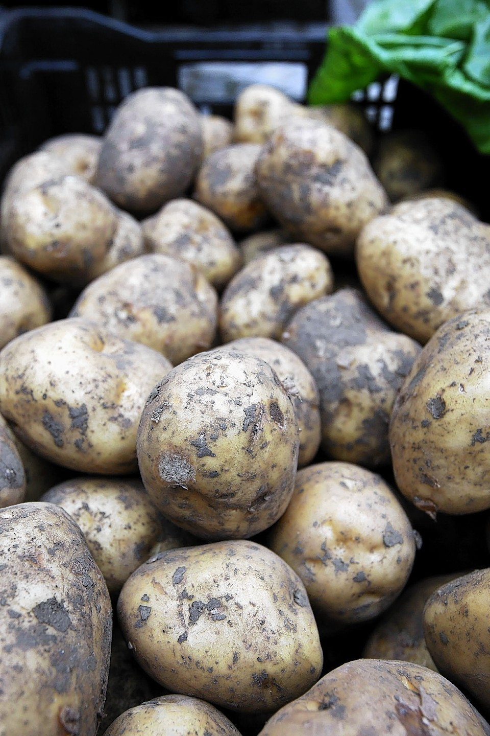 The figures cover the amount of potatoes in storage at the end of March.