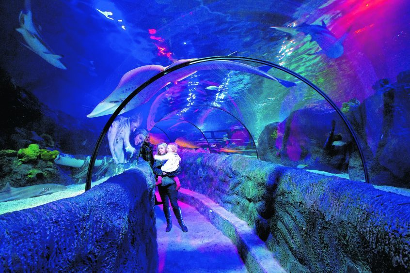 Loch Lomond aquarium