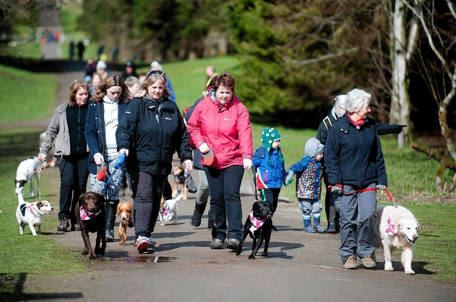 Hearing Dogs for Deaf People's Great British Dog Walk event