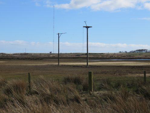 The finished platform taken by Ed Grace (RSPB Scotland)