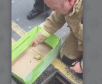A duckling is rescued from a drain in Worcestershire