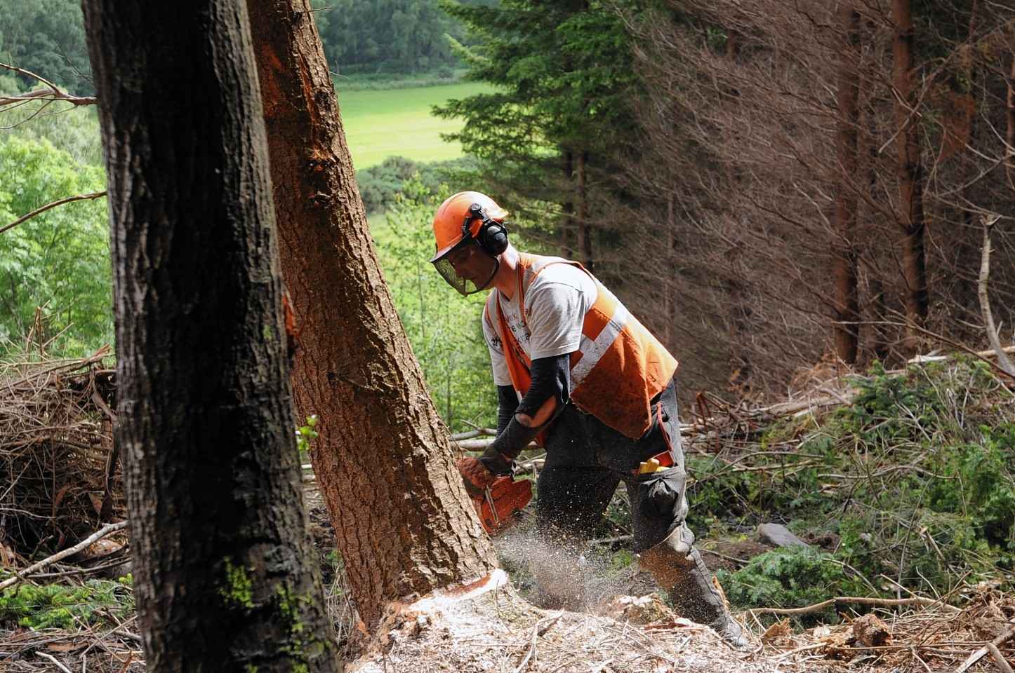 Almost £80m worth of forestry was sold in the UK last year