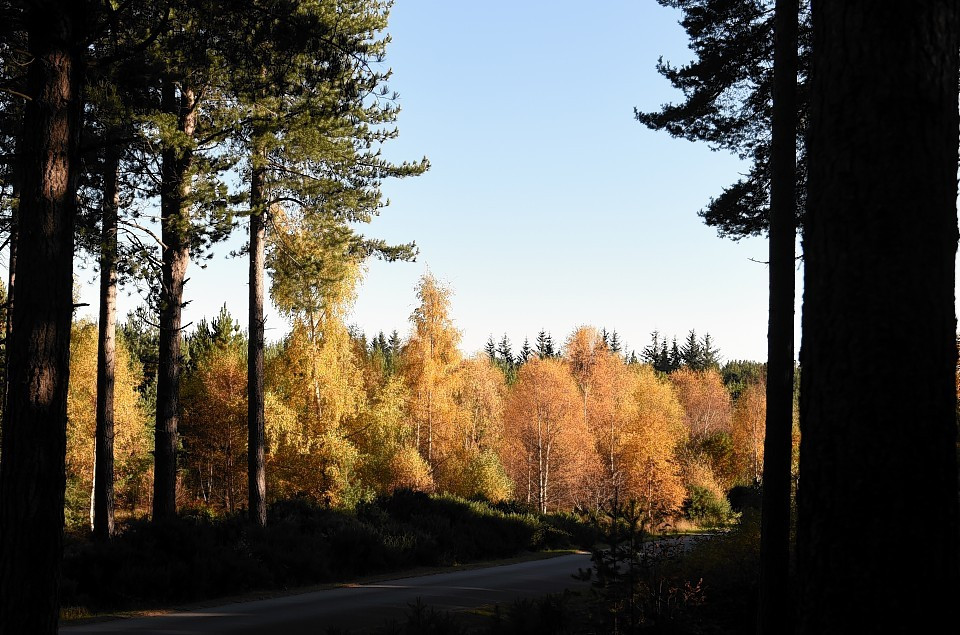 Roseisle Forest, Moray