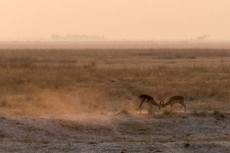 Botswana is one of Africa's most successful safari destinations