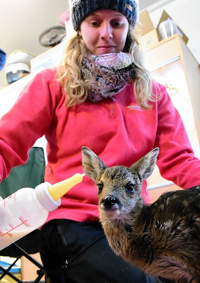 Assistant at New Arc Mel Noble with Mavis the deer. Picture by Kami Thomson