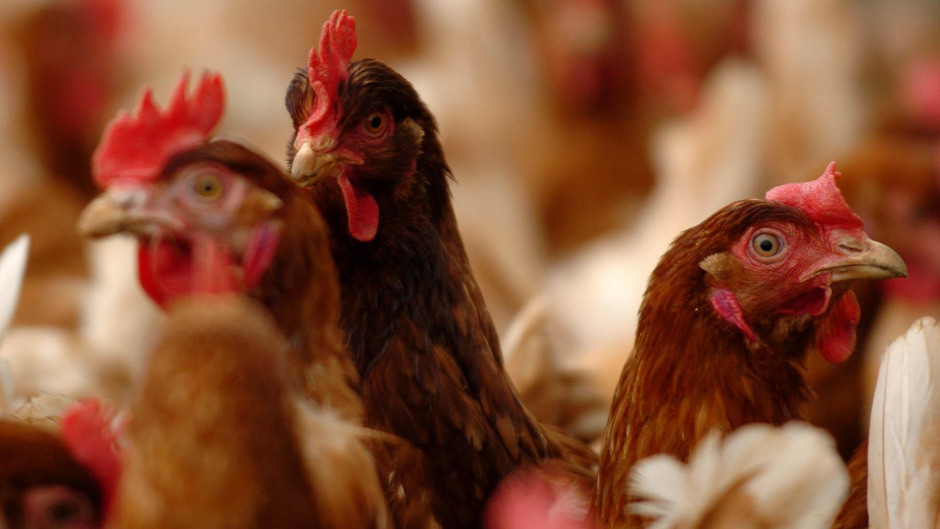The farm is home to an organic eggs business