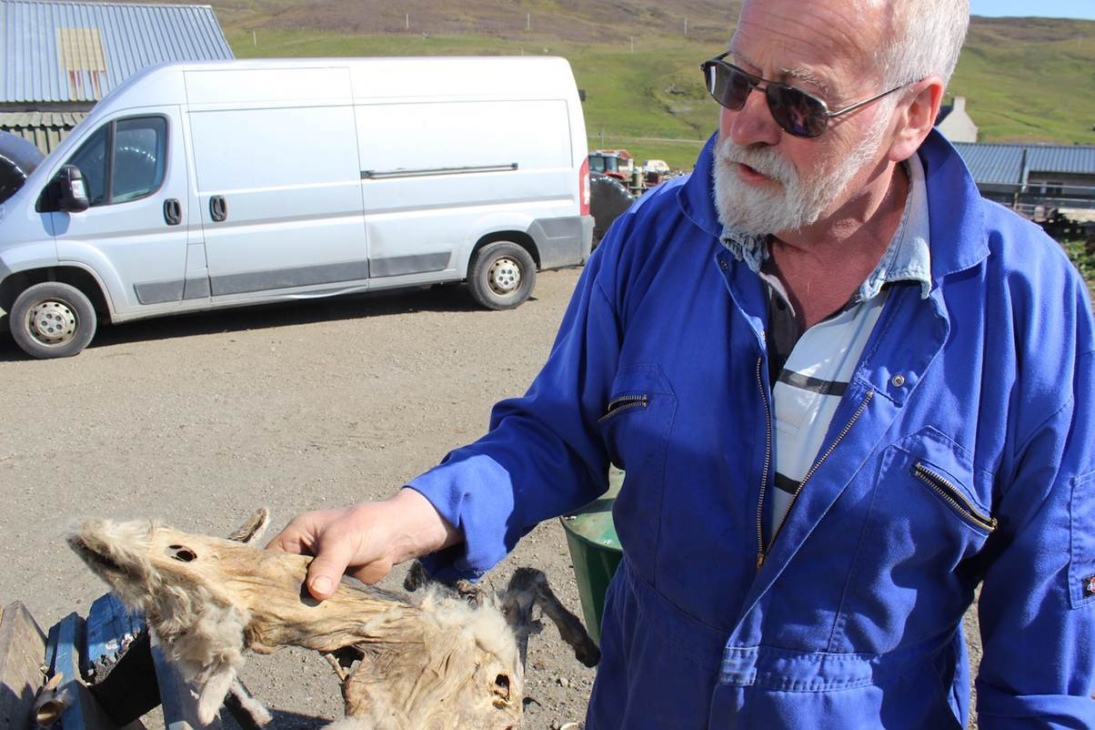 Allan Ridland with one of the murdered sheep