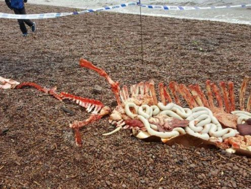 The mysterious remains were found on the shore at Dores Beach