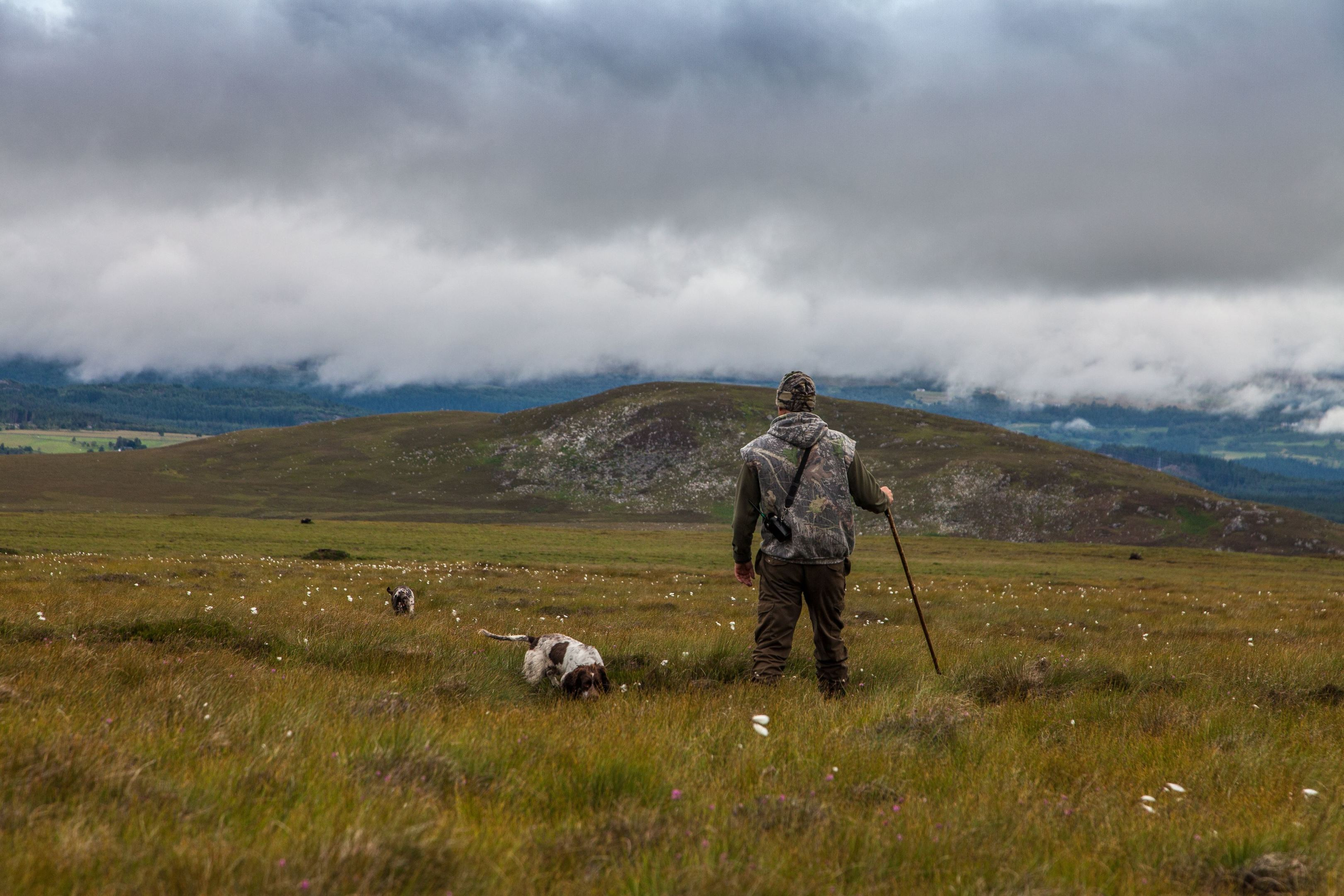 Corriegarth grouse count