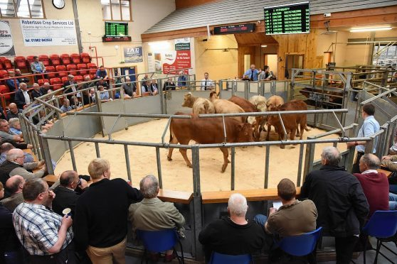 Cattle go through the sale ring at a previous sale